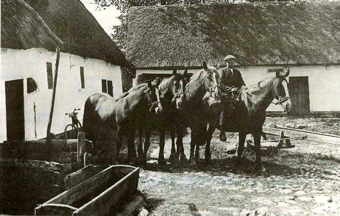 """""""Gammelgaard"""" i Neder Fløjstrup ca. 1910. Gården har været Birkedommergård i 1700 og 1800 tallet. Birkedommer Ole Christensen døde i 1733 og hans svigersøn Rasmus Mikkelsen overtog gården og birkedommerhvervet. Midterpartiet til længen til venstre væltede i en februarstorm i 1934. Længen midtfor blev nyopført i 1929. Den unge mand på hesten er Johannes Nielsen, som var søn af ejerne Rasmus og Mette Marie Nielsen. Bemærk vippebrønden til venstre og hestegangen til højre."""