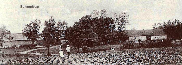 Disse 2 gårde på Synnedrupvej var i sin tid tvillingegârde. Gården til venstre blev i I866 flyttet ca.. 70 m. Udlængeme er opført eller en brand i 1892, mens Peter Christensen ejede den. Gården blev i mange år drevet af Jens Anker Jensen - men blev for få år siden overtaget af sønnen Niels Arne Gammelgaard. Gården til højre er en gammel slægtsgård, som drives af Svend Tage Jørgensen. Den er opført efter en brand i 1894, mens Svend Tage Jørgensens bedstefar Jens Jørgensen ejede den.