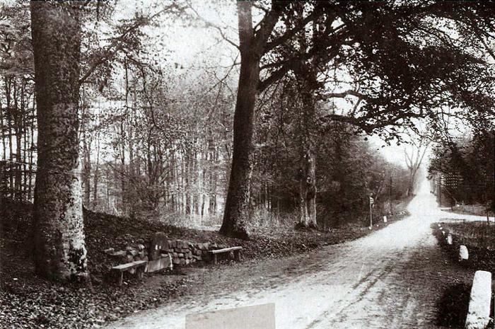 Et dejligt billede fra Vilhelmsborg Skov med den gamle kilde, som var et yndet samlingssted. Vejen er den gamle Odder - Århus landevej, der drejer ind til Beder til højre. Vejen i forgrunden fører til Vilhelmsborg. Kilden blev i 1840 rørlagt og ført frem til udløb på dette sted. Man fortalte, at der skulle 12 skolebørn til at nå rundt om stammen på det store bøgetræ ved siden af kilden.