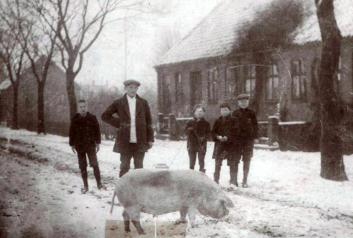 Billedet er fra Beder Landevej, 1916. Svend Pedersen fra Damgården driver julegrisen til slagteren. Kort før jul blev fedegrisen slagtet, så kødet kunne være friskt til jul. Der var ingen køleskabe, så flæsket måtte saltes i saltkarret, der var af træ. Noget af kødet blev røget enten som hele stykker eller som pølser. Blodet blev lavet til blodpølse, hovedet til sylte og lunger, hjerte og nyrer blev hakket og lavet til finker. Af tæer og hale blev der kogt suppe. Hele grisen blev altså udnyttet. Huset bagved er gartnerskolens. Det blev revet ned i 1968.