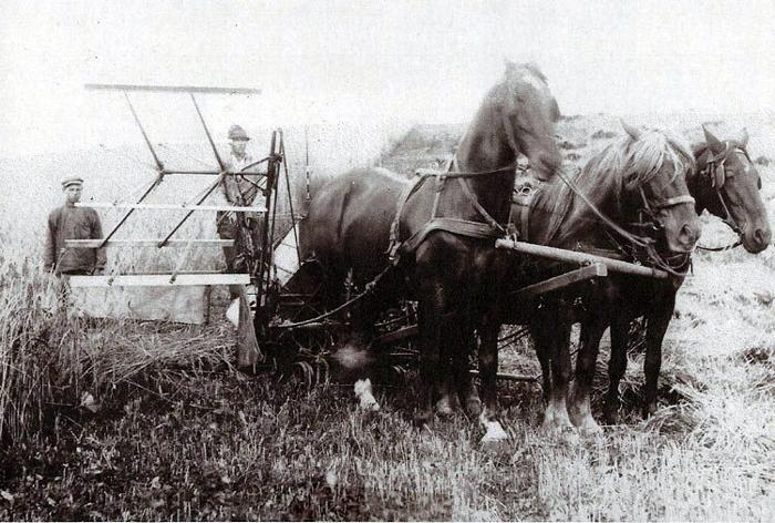 Høsten er startet i Fulden omkring 1920. På selvbinderen sidder Ejner Pedersen, søn af Niels J ones Pedersen, Fulden, den stående medhjælper er ukendt. Ejner Pedersen var i nogle år i Amerika men vendte atter hjem og købte en gård i Nordsjælland.
