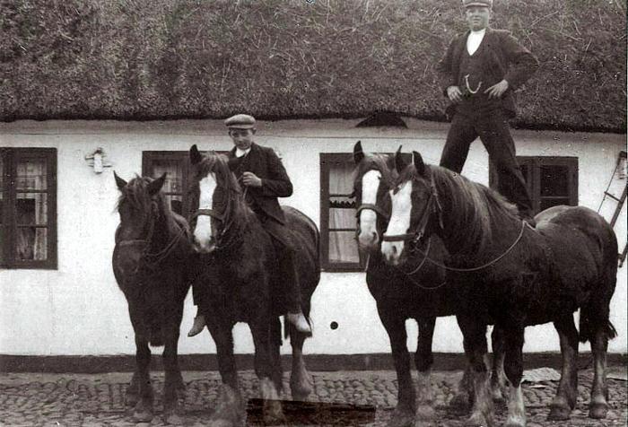 """2 spand heste er klar til at køre i marken. Billedet er taget i 1912 på gården """"Haslesrninde"""" i Storenor. Det er sønnen Cilius Hasle Laursen, der står på ryggen af det ene spand, mens Christian Lind foretrækker at sidde ned."""