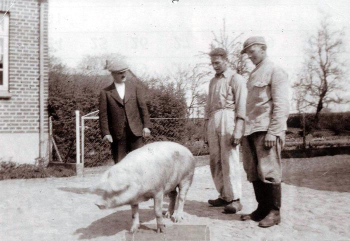 Til ve. Karl Rasmussen, ejer af Toftegaard, far til Rasmus Rasmussen, yderst til hø. Niels Bjørnkjær. Foto 1954