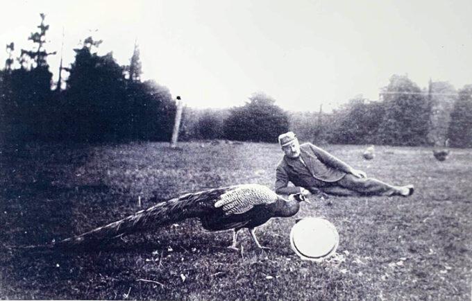 Kroejer Niels Peder Pedersen i krohaven, hvor han holdt påfugle.